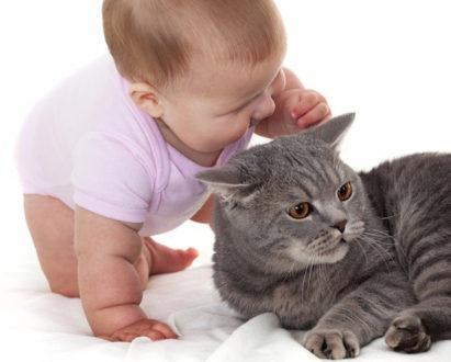 20562 - Алергія у дитини на тварин