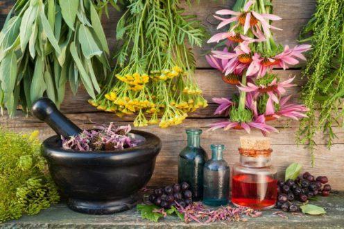 Рослини і трави від алергії