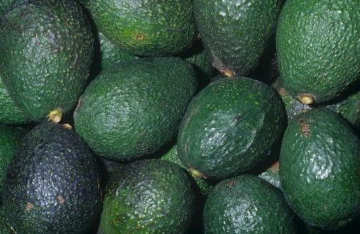 25480 - Масло авокадо: косметичні властивості