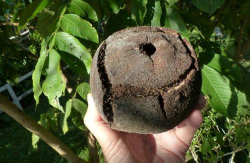 Інші корисні властивості бразильського горіха