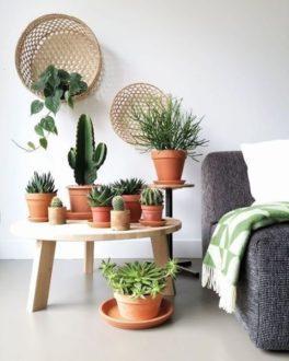 Корисні властивості і застосування кактуса